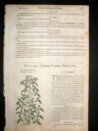 Gerards Herbal 1633 Hand Col Botanical Print. Treacle Clauer Trefoil